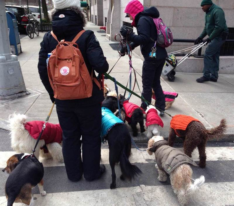 Dogwalker in the Upper East Side