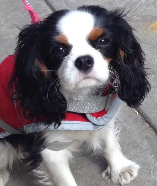 schattig hondje op straat in New York City