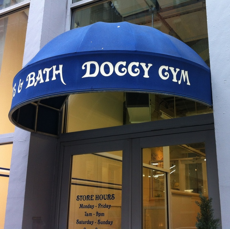 Doggy gym in New York City