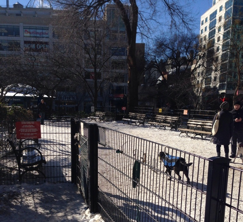 dog run Union Square in New York City